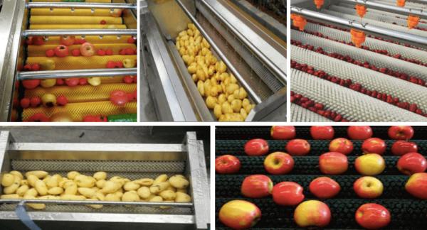 """""""fruit vegetable brush application"""""""